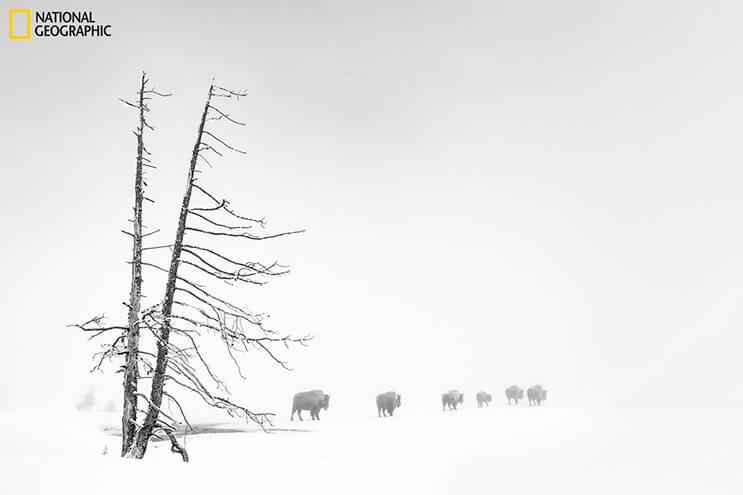 ganadores-del-concurso-de-national-geographic-que-premia-las-mejores-fotografias-de-naturaleza-4