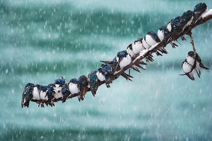 La belleza de las aves captadas por Keith Williams