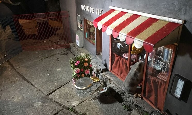 una-tienda-de-diminutas-dimensiones-en-plena-calle-de-suecia-001