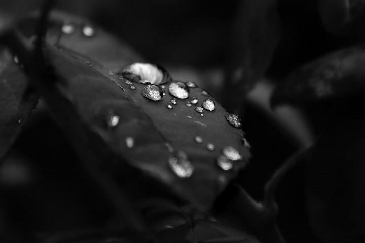 rociador de agua para fotografía