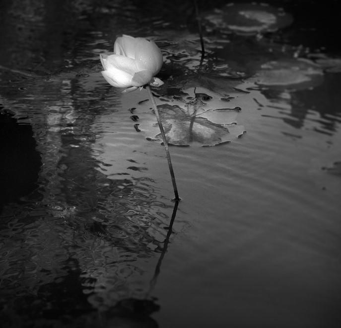Viajes y emociones en blanco y negro fotograf as de daniel tjongari - Fotos en blanco ...