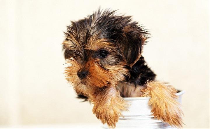 Las 10 Mejores Fotografías De Razas De Perros Pequeños