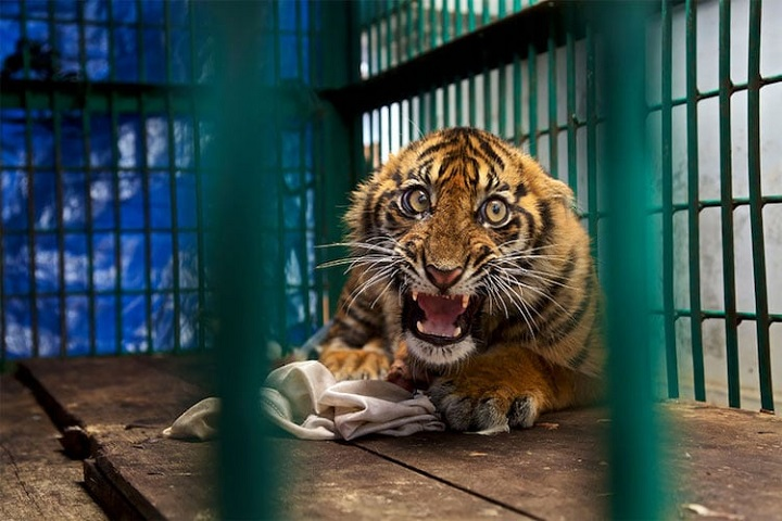 f301d1d9d8e91 animales Archives - Últimas noticias de la actualidad - Noticias ...