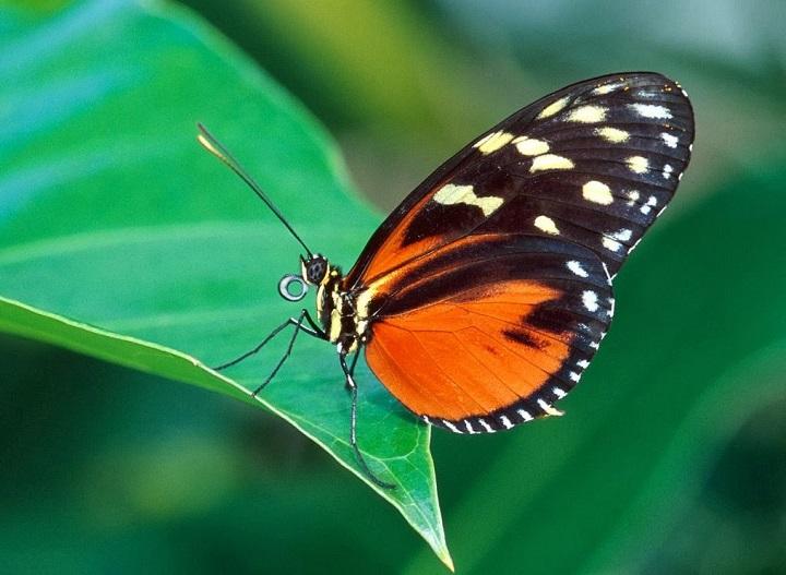 Clima para fotografiar mariposas