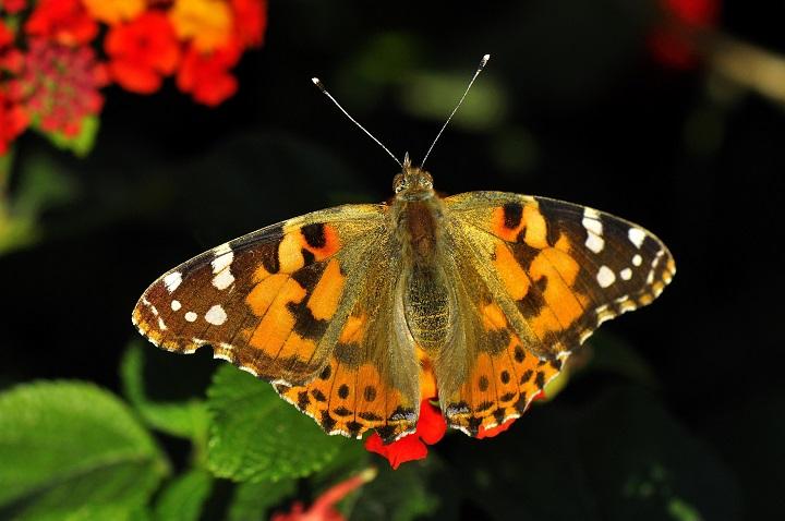 foto mariposa iluminada