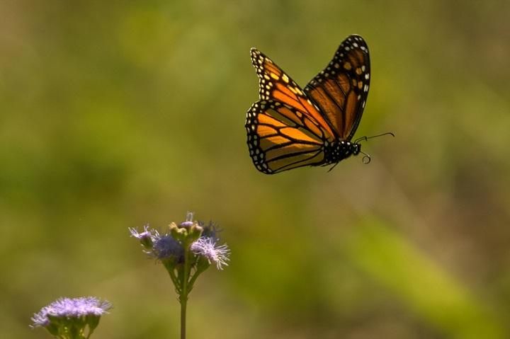 Fotografía de mariposa - Importancia