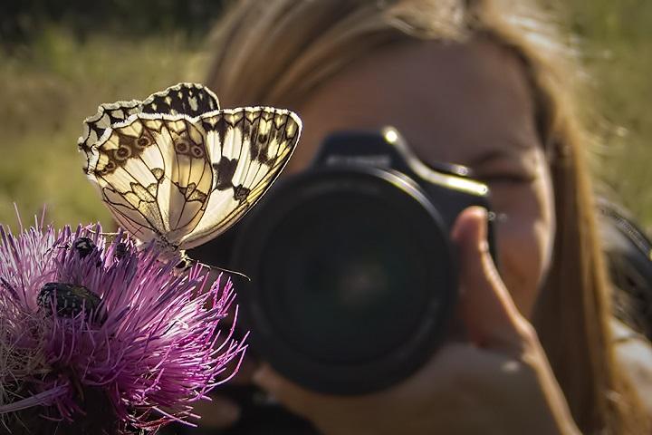 mariposas - cómo fotografiar