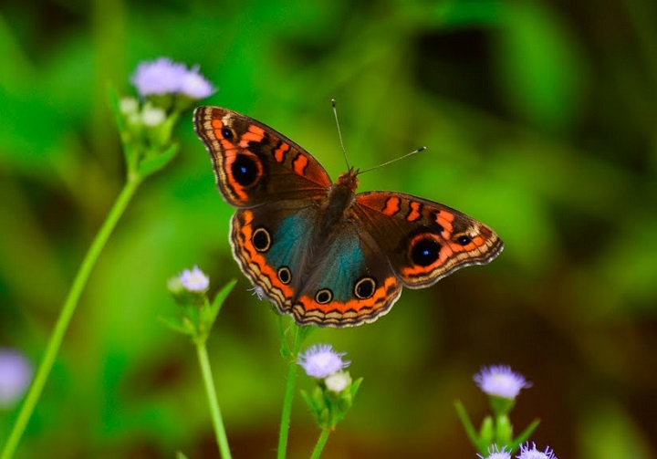 foto mariposa profundidad de campo