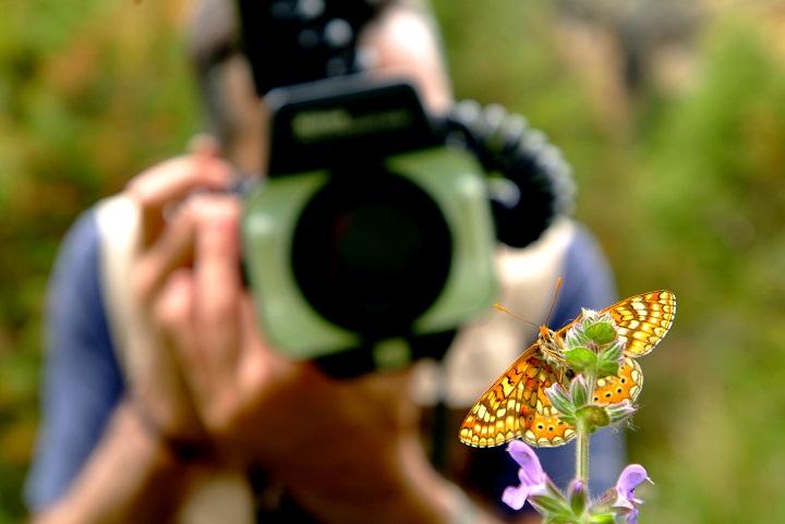fotografía mariposa ubicación