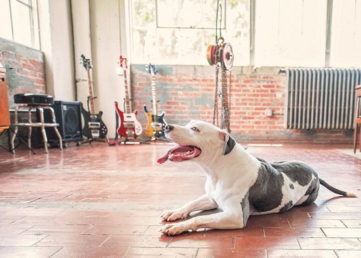 fotografía perro confianza