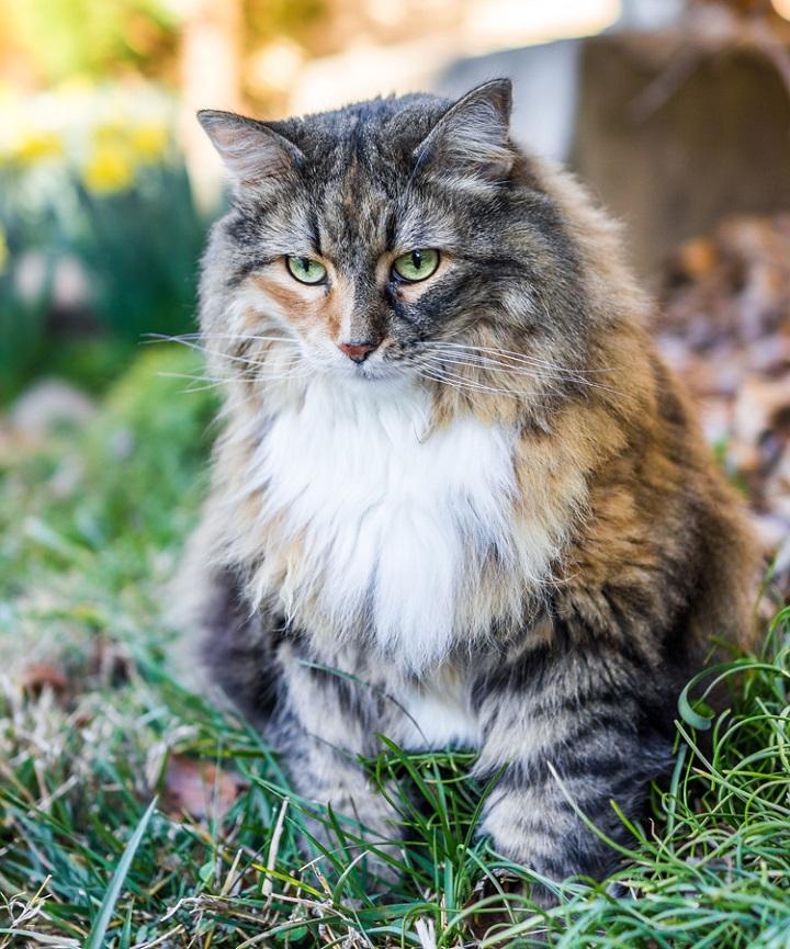 fotografía gato zona de confort