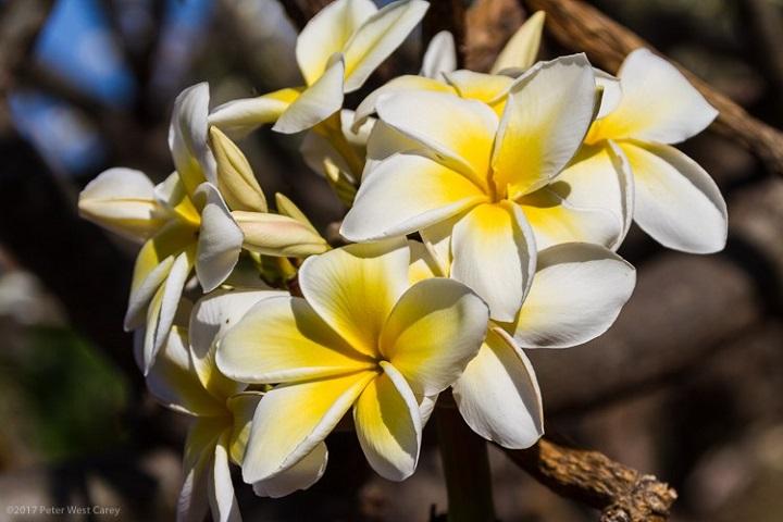 Flores blancas con profundidad de campo