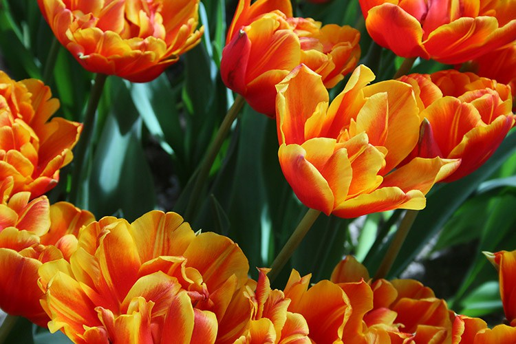 imagen de flores naranjas