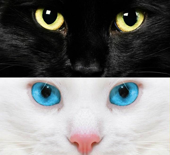 gatos negro y blanco
