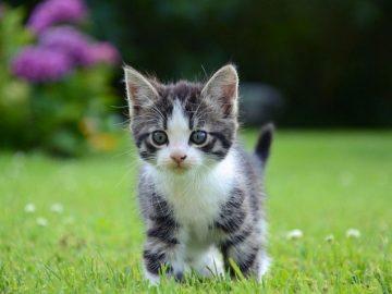 gatito bebe