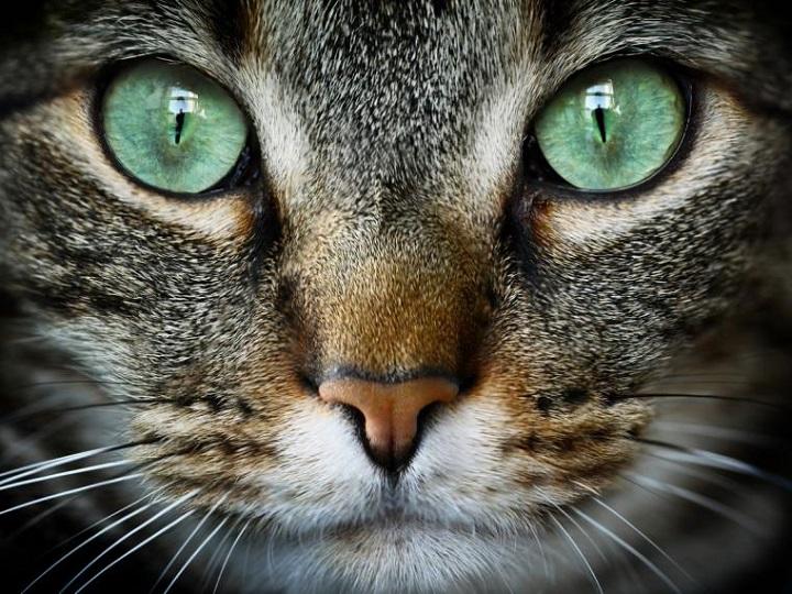 ojos de felino