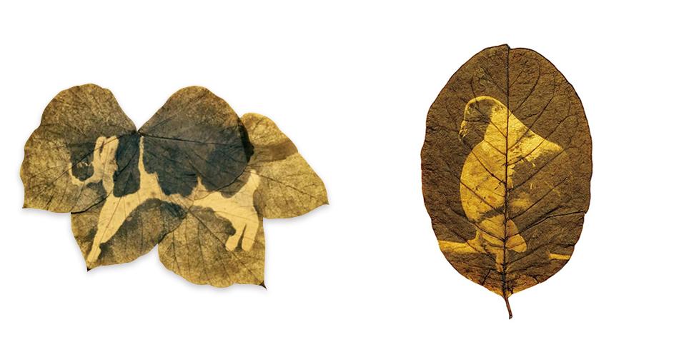 Hiro Chiba Artista Que Usa Hojas De Arboles Como Papel Fotografico - Hojas-de-arboles
