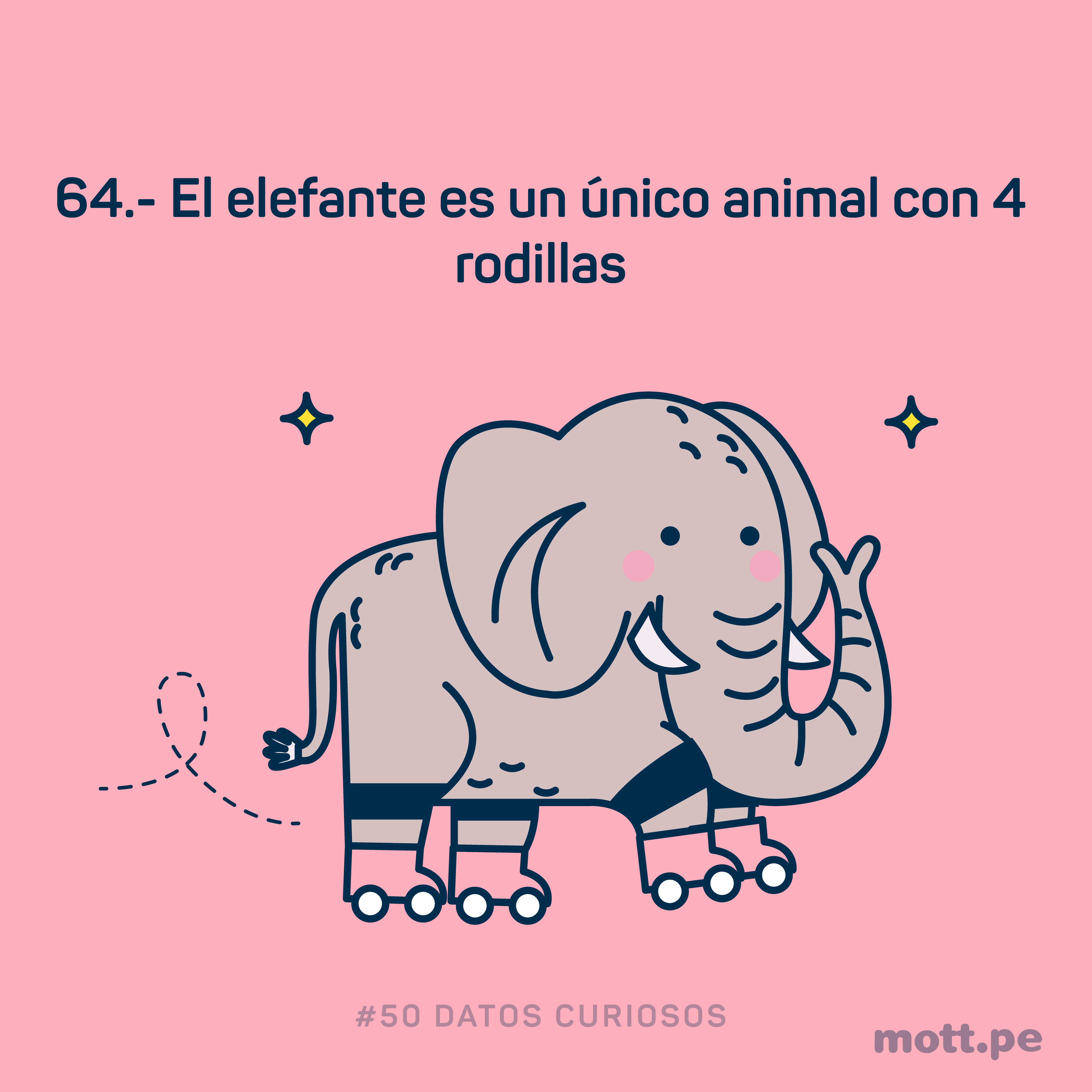 solo el elefante tiene 4 rodillas