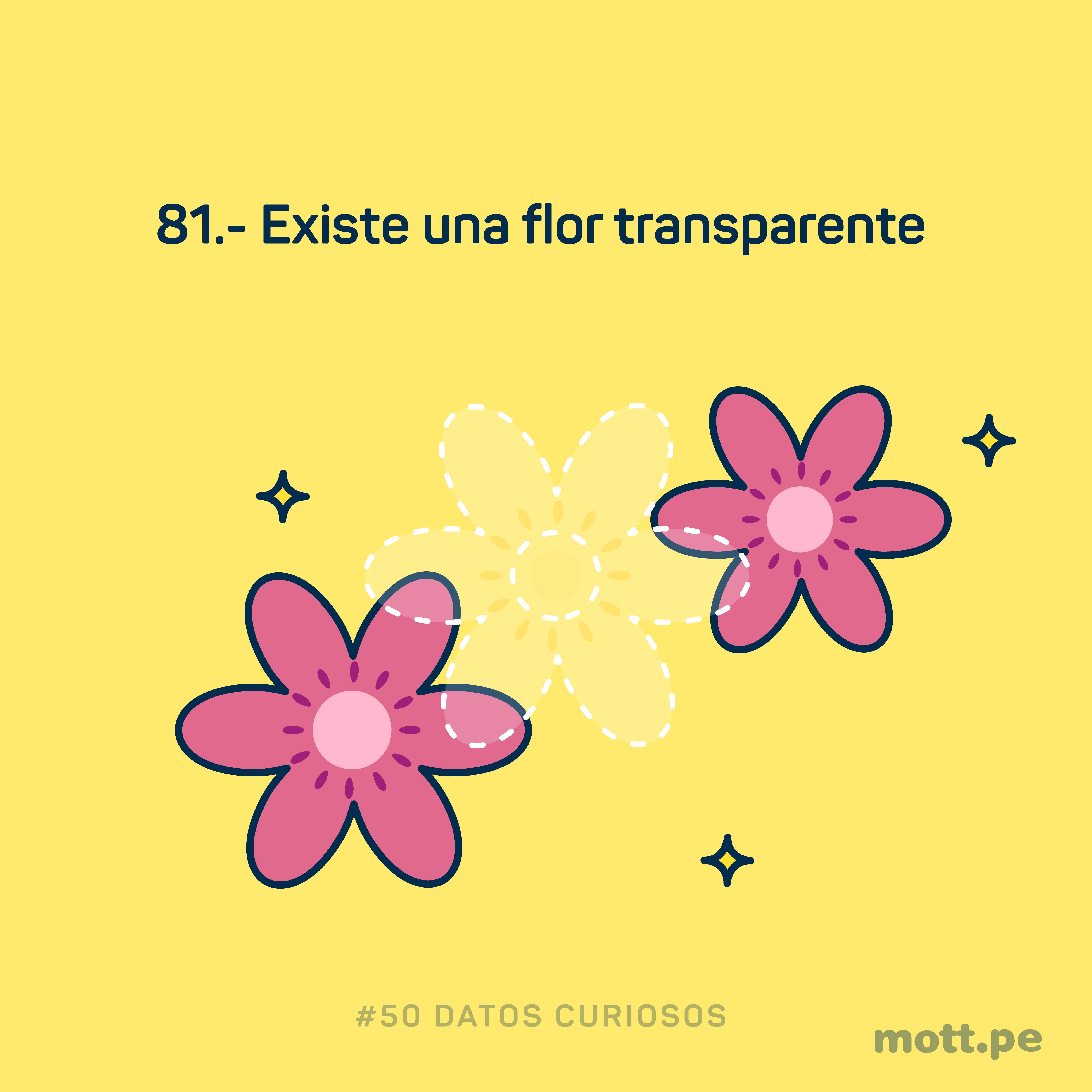 existe la flor transparente