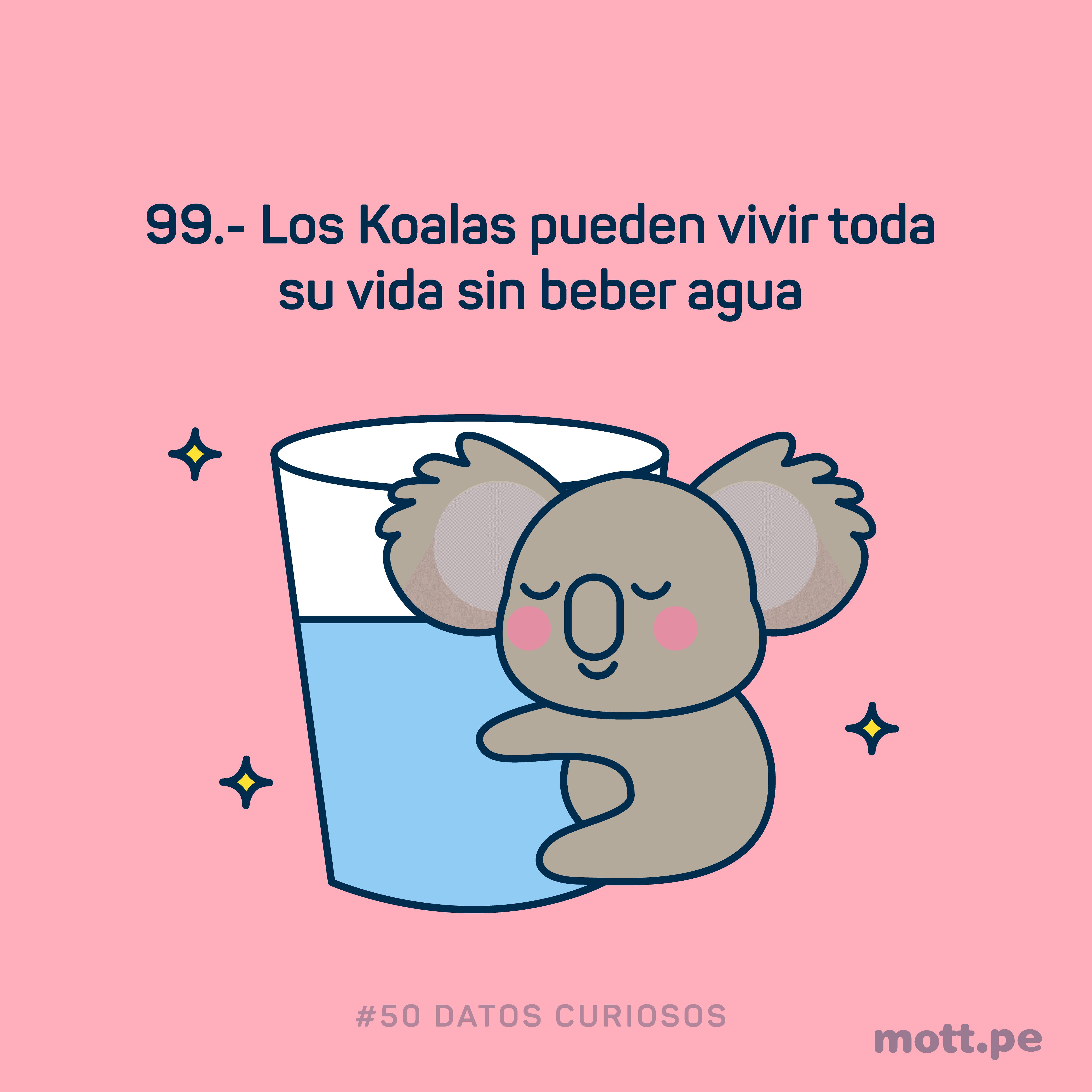 el koala puede vivir sin beber agua