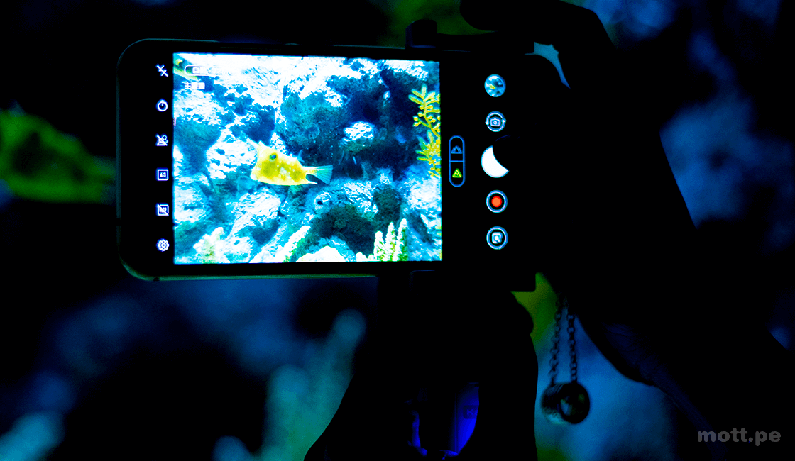 ¿Cómo-solucionar-los-problemas-de-reflejo-en-la-fotografía-de-acuario-1.png