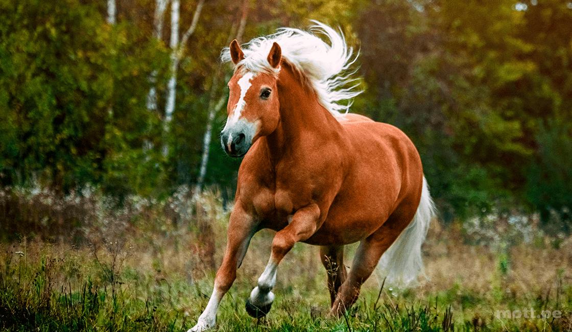 Elige-el-mejor-ángulo-para-la-sesión-fotográfica-con-caballos-1.png