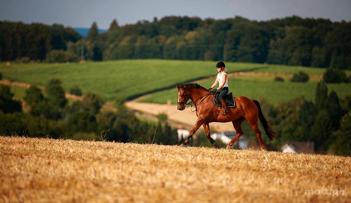Las-mejores-fotos-de-caballos-se-tienen-con-un-poco-de-paciencia-1.png