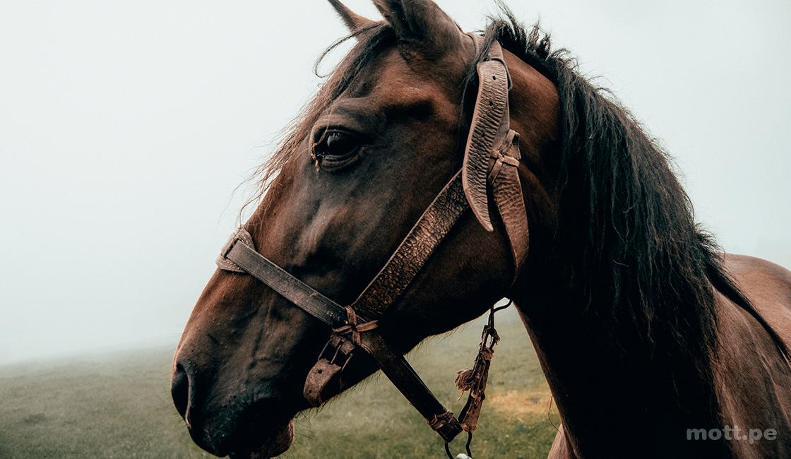 Llama-la-atención-de-los-caballos-para-un-foto-retrato-hermoso-1.png