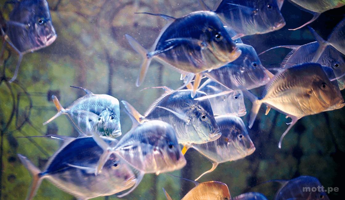 niveles de exposición en las fotos del acuario