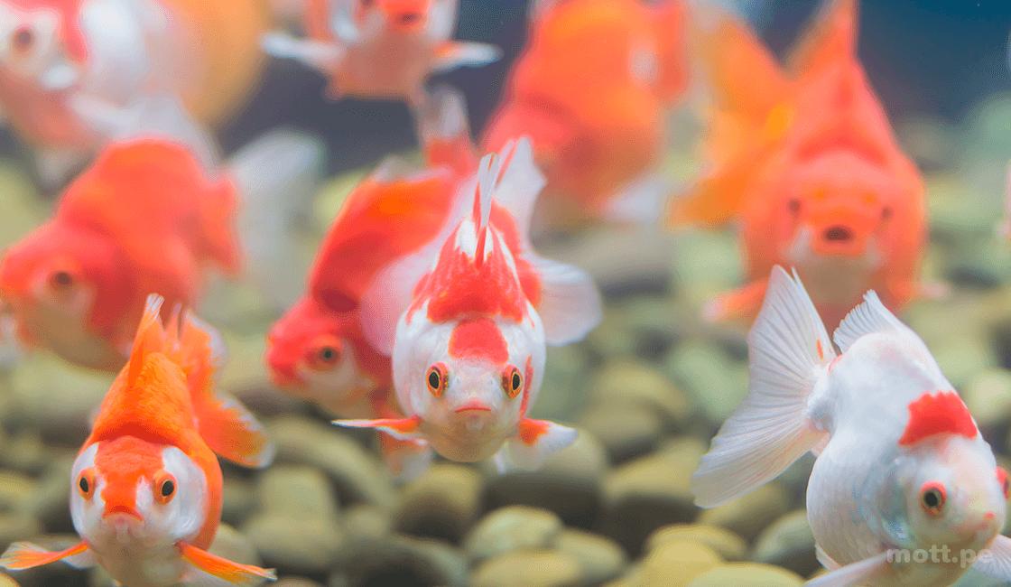 Realiza una profundidad de campo pequeña para fotografiar peces