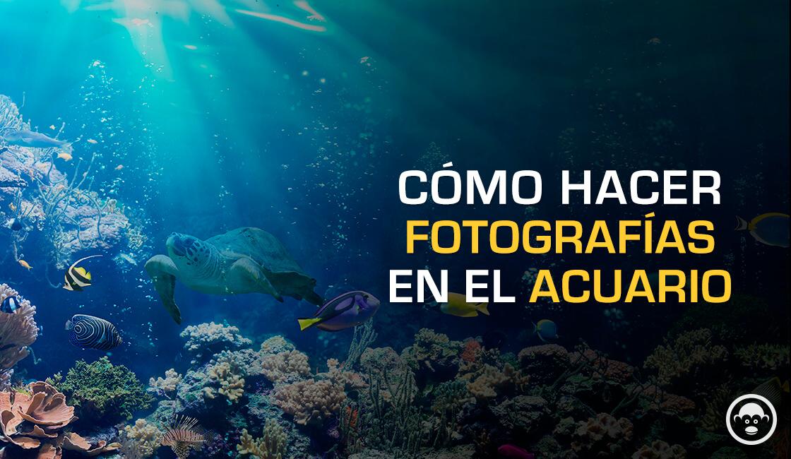 como tomar buenas fotos de acuarios