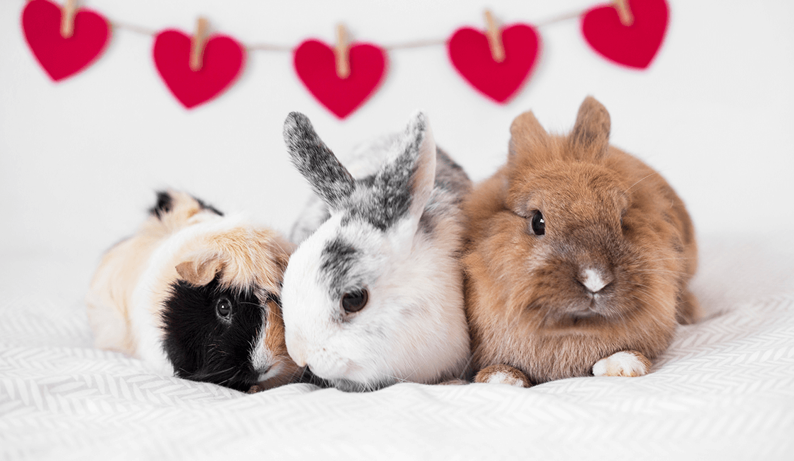 ¿Cómo-usarás-tus-imágenes-de-animales-y-conejos