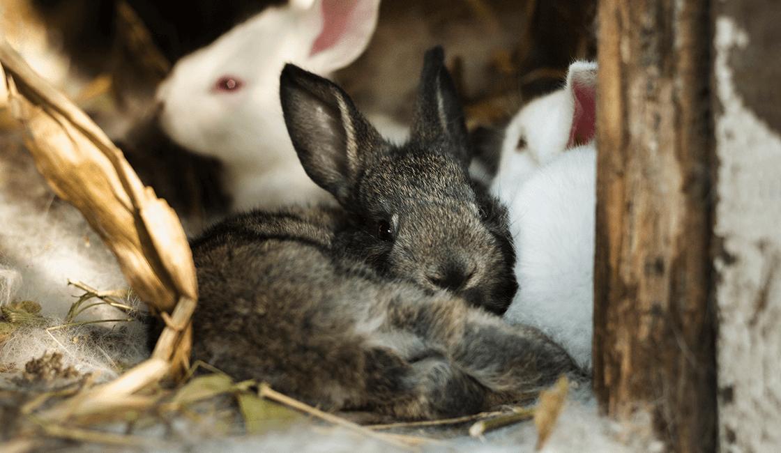 ¿Cuál-es-la-mejor-luz-en-interiores-para-de-una-de-las-mejores-fotos-de-conejos-bonitos