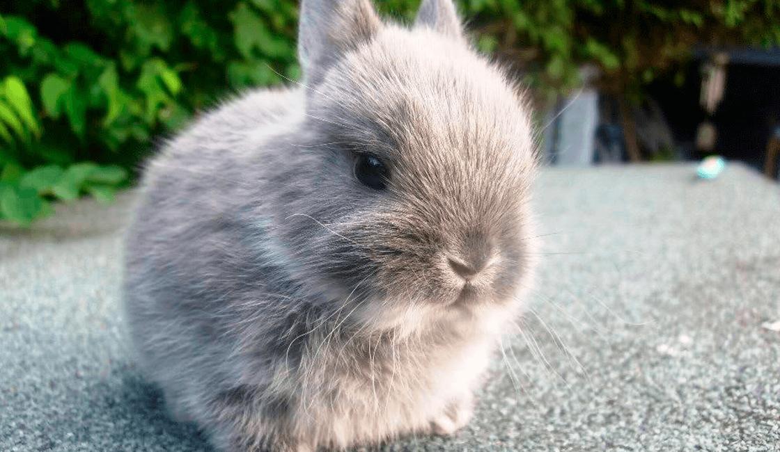 Acercarse-lo-más-posible-para-retratar-imágenes-de-conejos-
