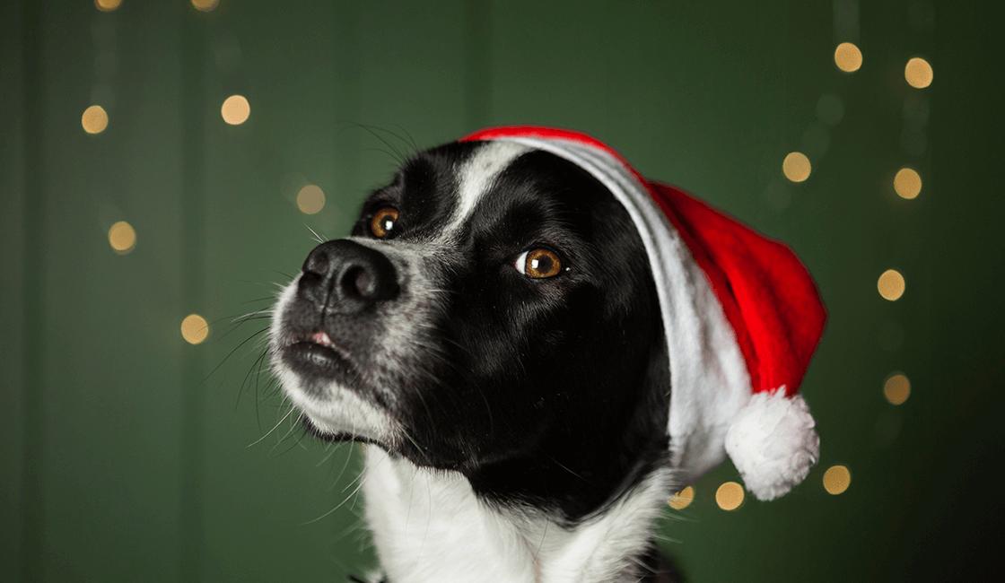Fondos-navideños-para-fotos