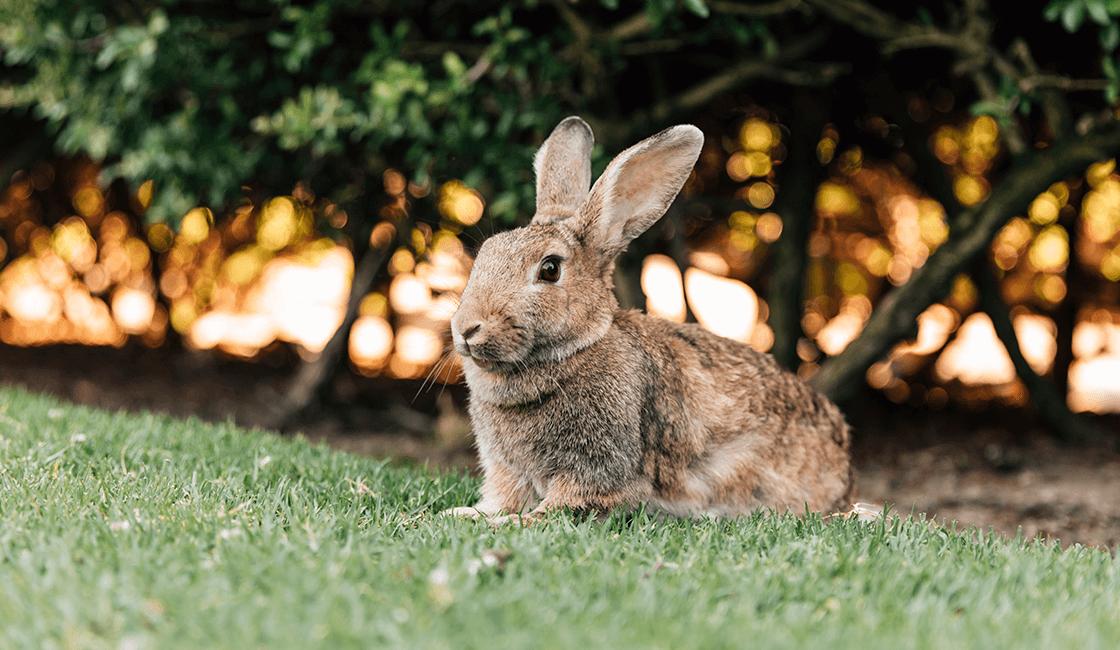 Tips-para-tomar-buenas-fotos-de-conejos-que-encantarán