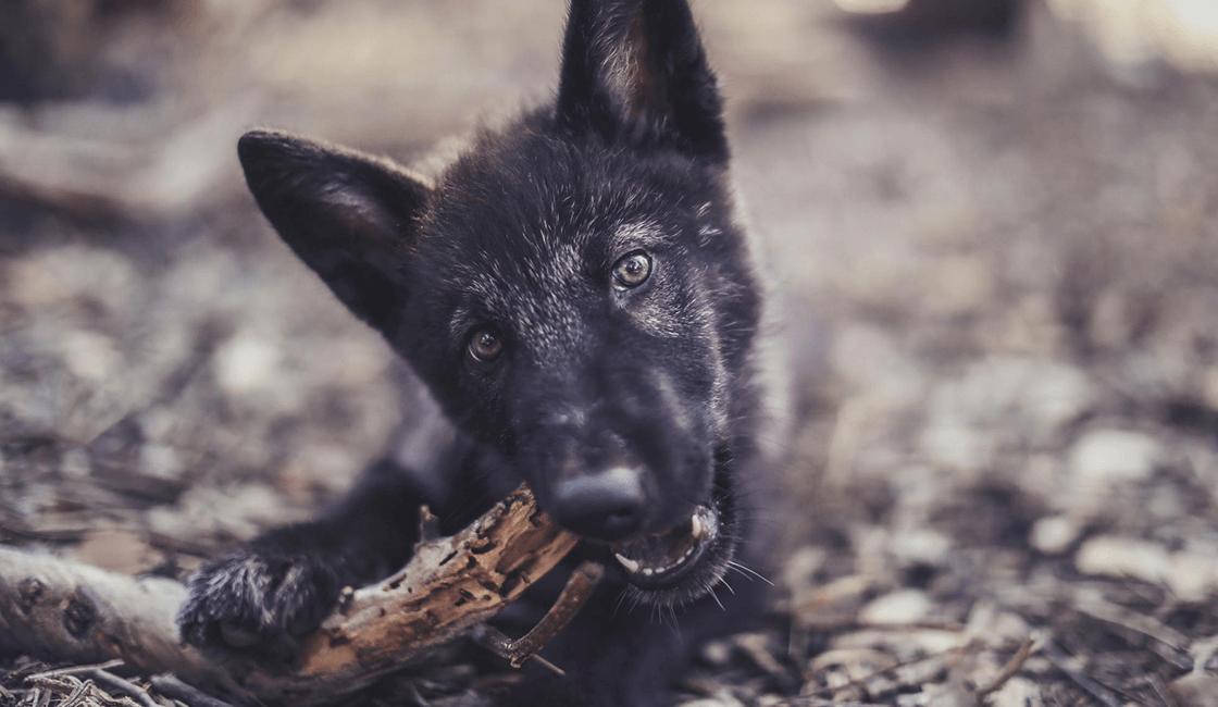 Cómo-hacer-una-perspectiva-en-la-fotografía-de-mascotas