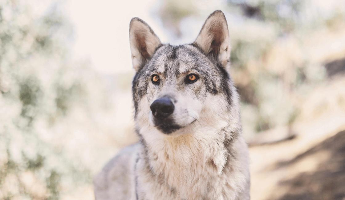 Perspectivas-basadas-en-la-composición-en-la-fotografía-para-mascotas