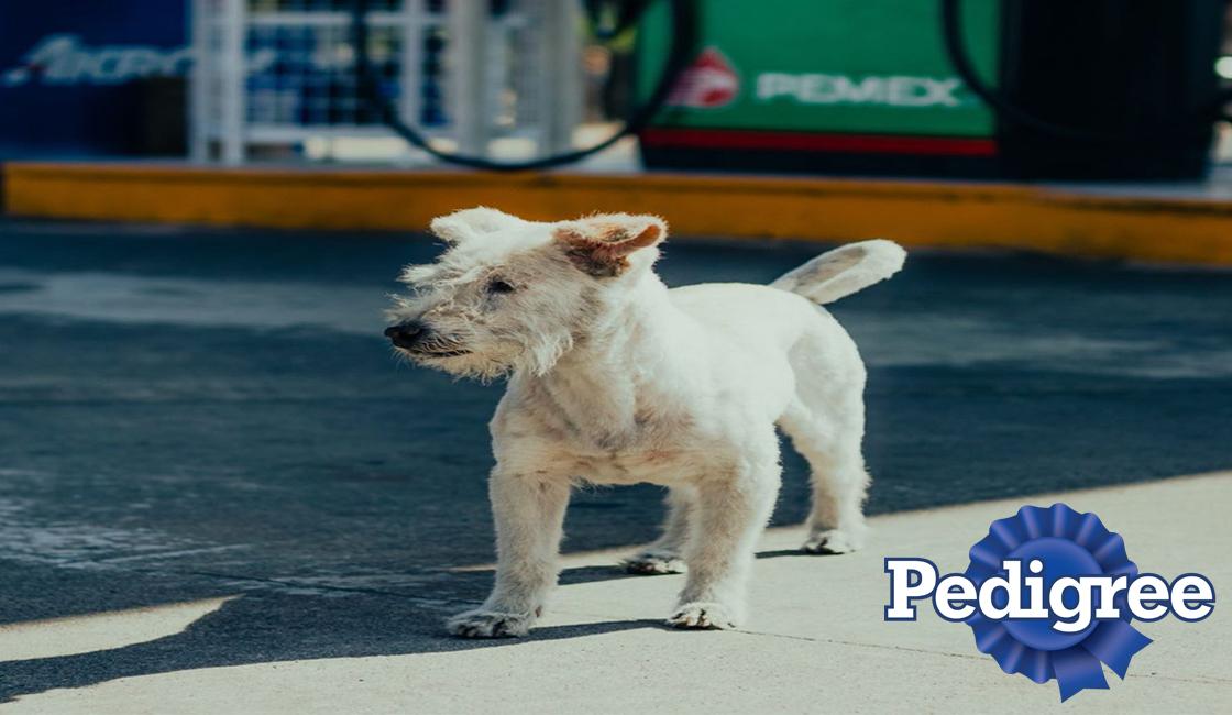 perro gasolin pedigree