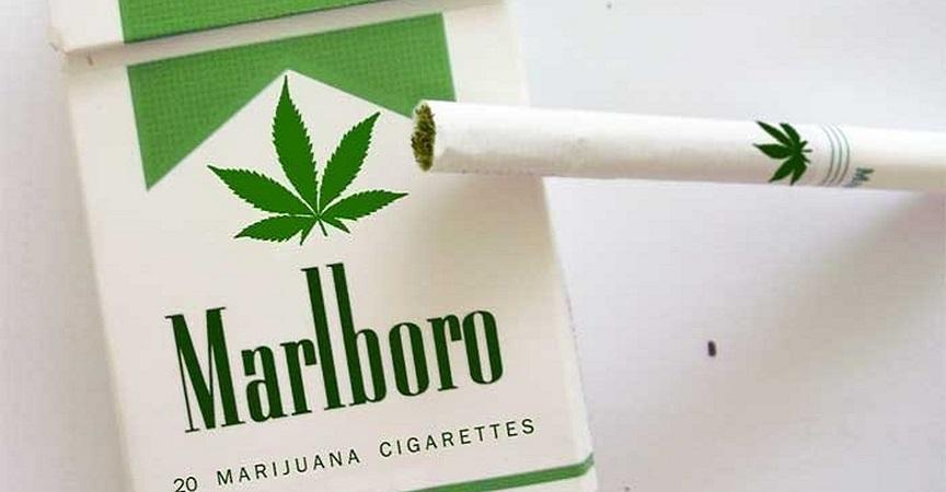Phillip Morris anuncia la venta de sus primeros cigarros de marihuana